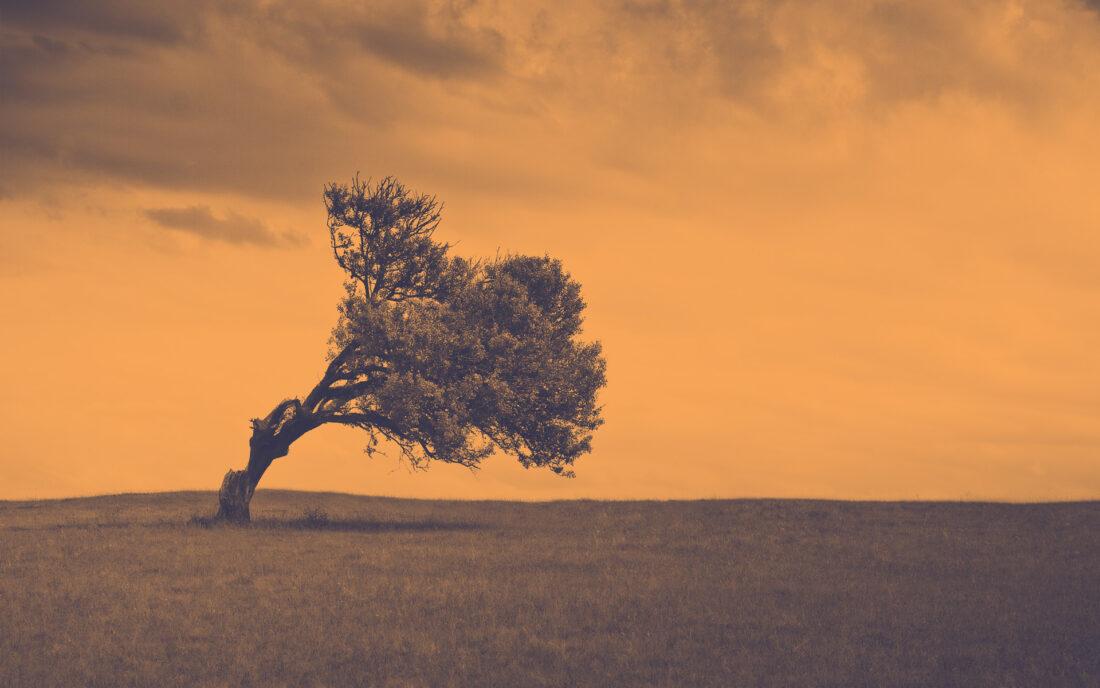 Un árbol solitario en medio de un prado está torcido hacia la derecha a causa de la fuerza del viento, hay nubes de tempestad y tiene un filtro rojo que ha eliminado los verdes